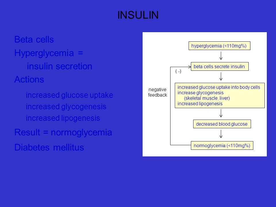 INSULIN Beta cells Hyperglycemia = insulin secretion Actions
