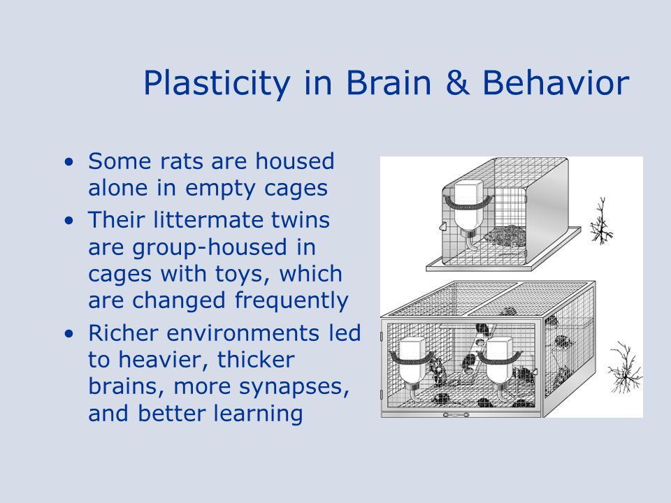 Plasticity in Brain & Behavior