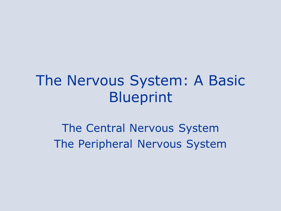 The Nervous System: A Basic Blueprint