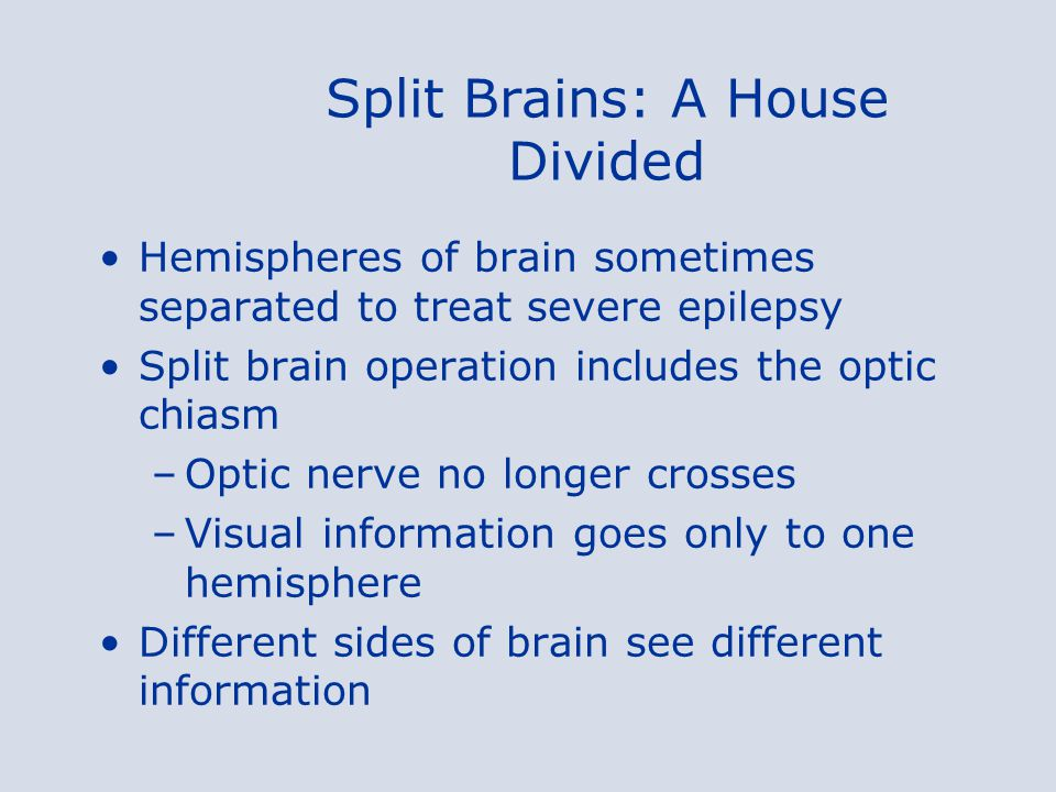 Split Brains: A House Divided