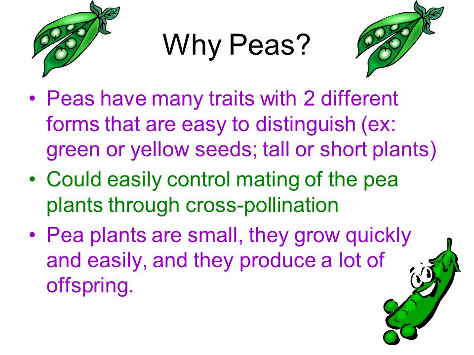Why Peas Peas have many traits with 2 different forms that are easy to distinguish (ex: green or yellow seeds; tall or short plants)