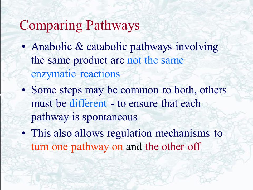chapter 17 metabolism an overview biochemistry by ppt download