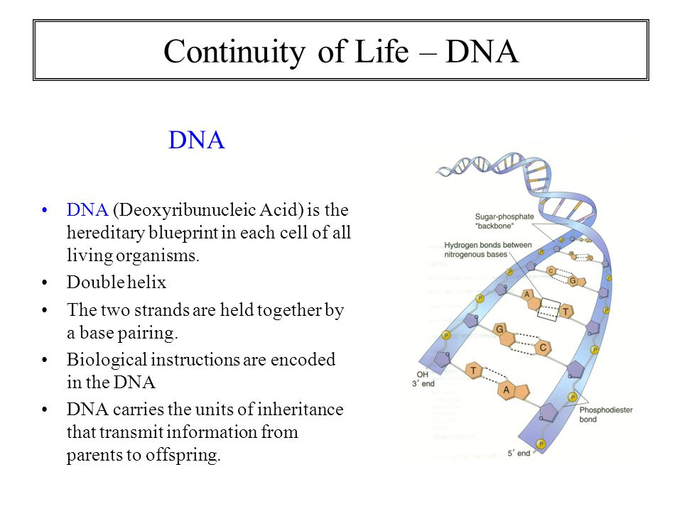 Exploring life chapter 1 ppt video online download 12 continuity malvernweather Gallery