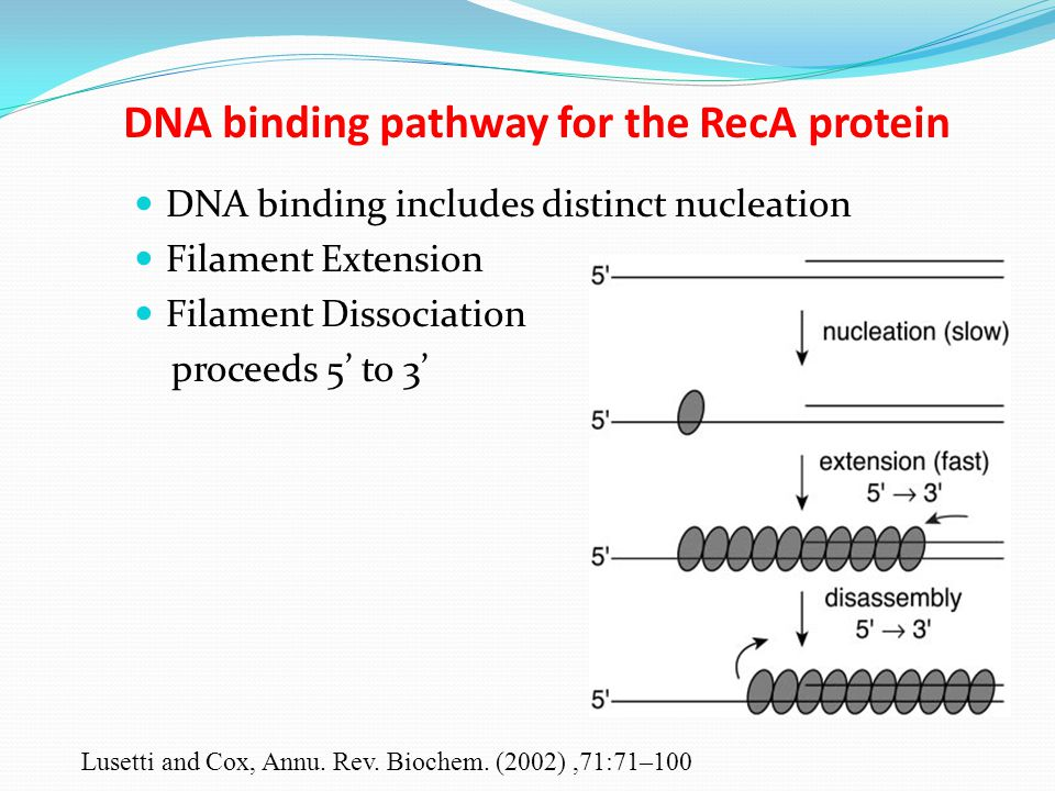 lan report dna biochem This biochemistry laboratory seeks to model work performed in a biochemical research laboratory the course will guide you through basic lab techniques, investigations into dna.