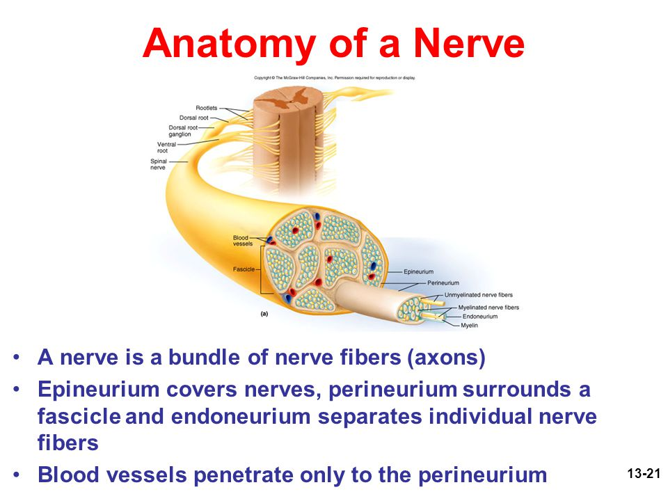Human Anatomy Physiology Ppt Video Online Download