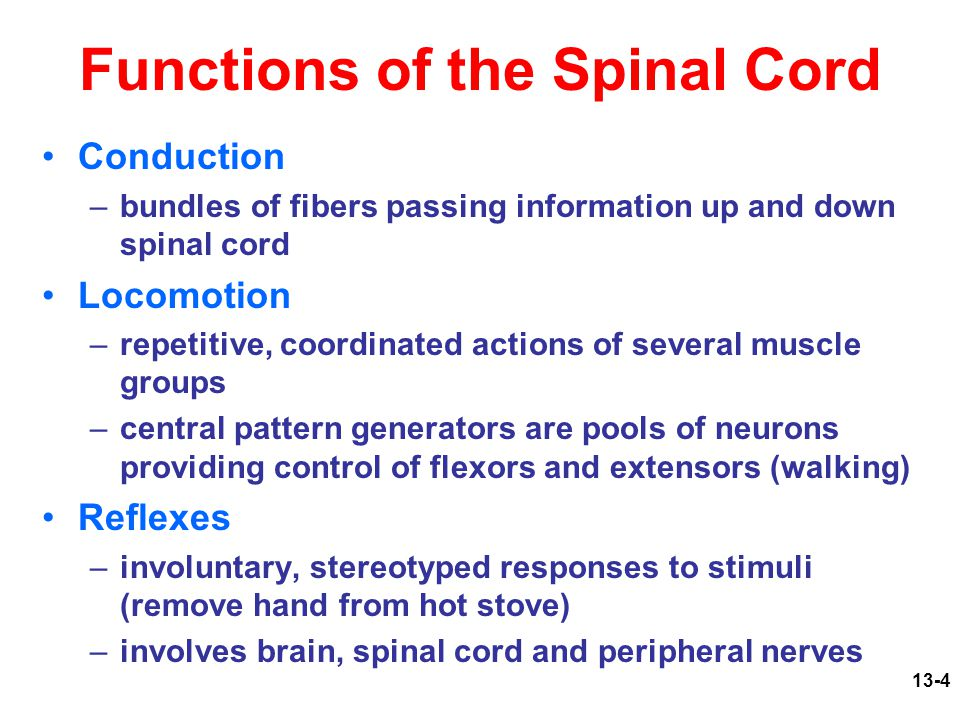 Fine Spinal Cord Anatomy And Function Picture Collection - Anatomy ...