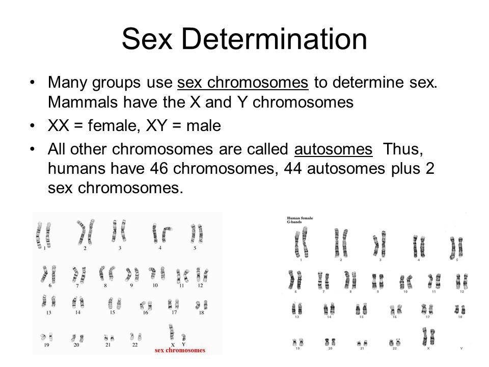 human sex topics