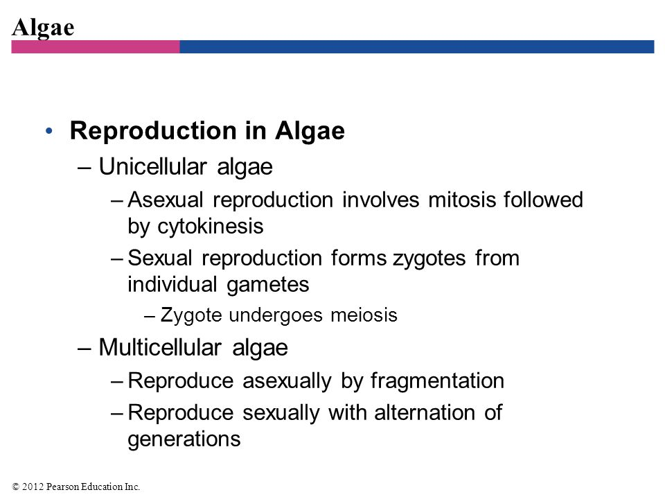 Does red algae reproduce sexually or asexually