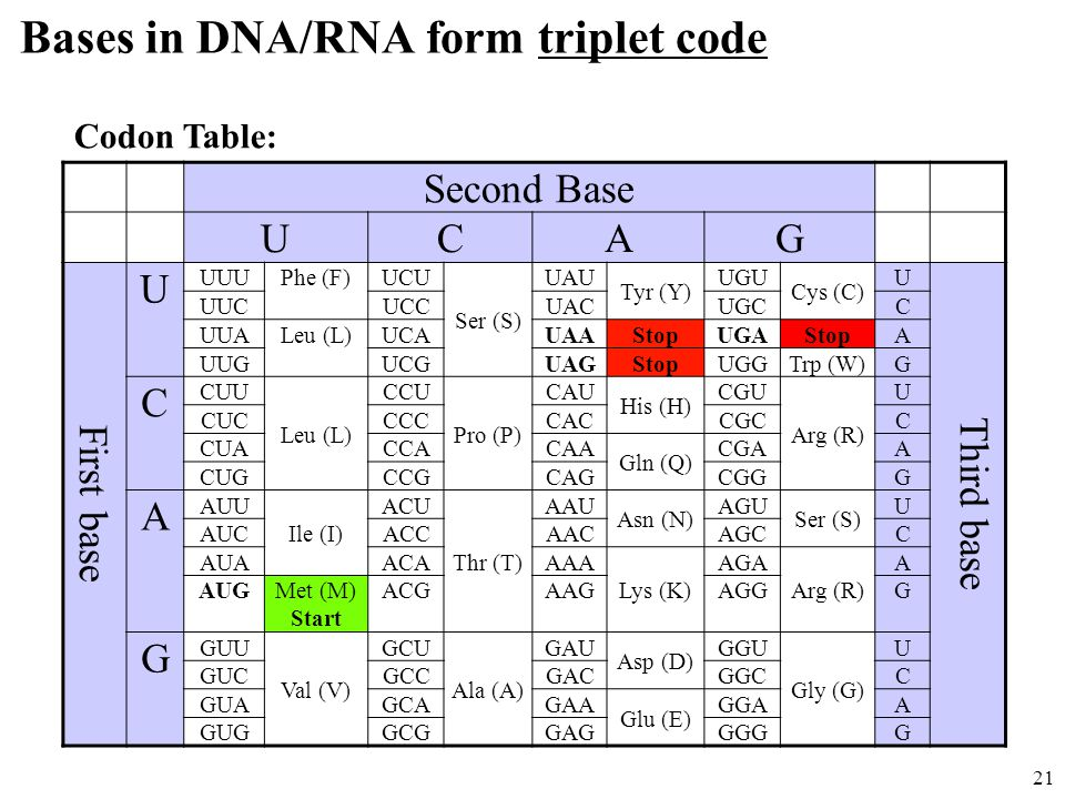Triplet Codon Table Part - 16: Bases in DNA-RNA form triplet code