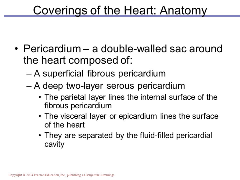 The Heart Exercise Ppt Video Online Download