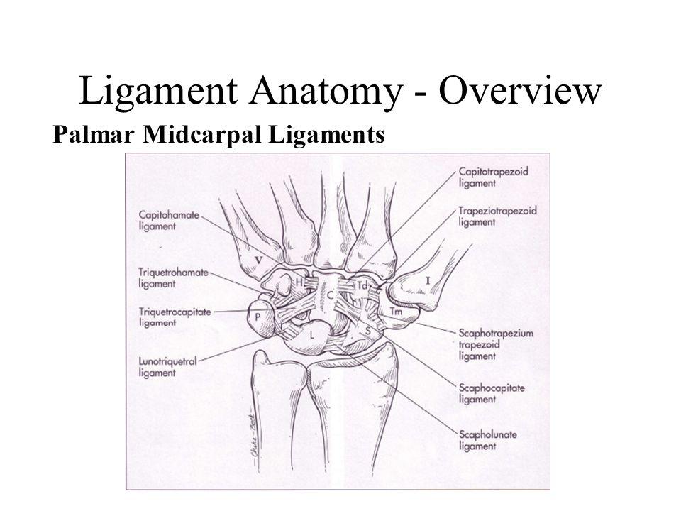 Carpal Ligaments Wrist Biomechanics Ppt Video Online Download