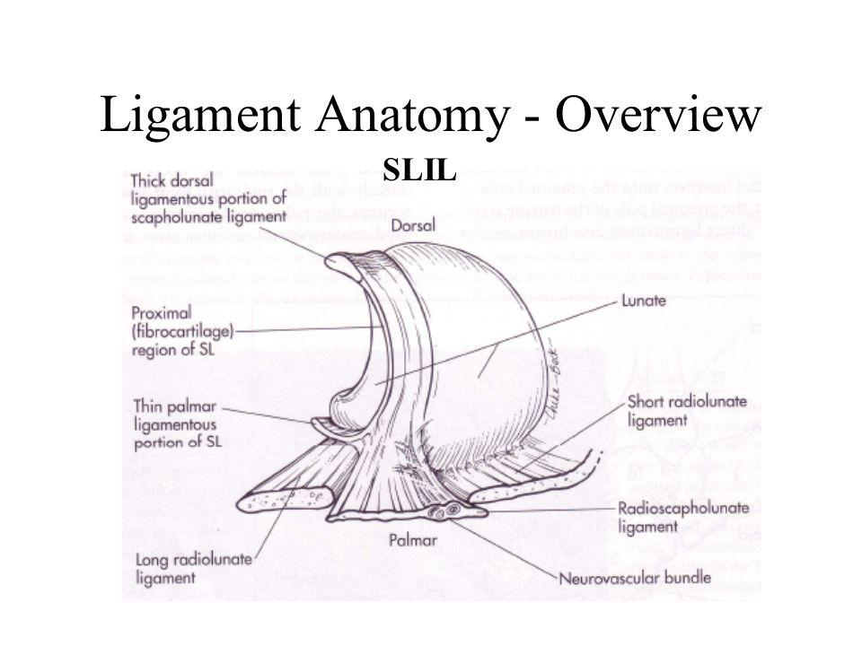 Carpal Ligaments & Wrist Biomechanics - ppt video online download