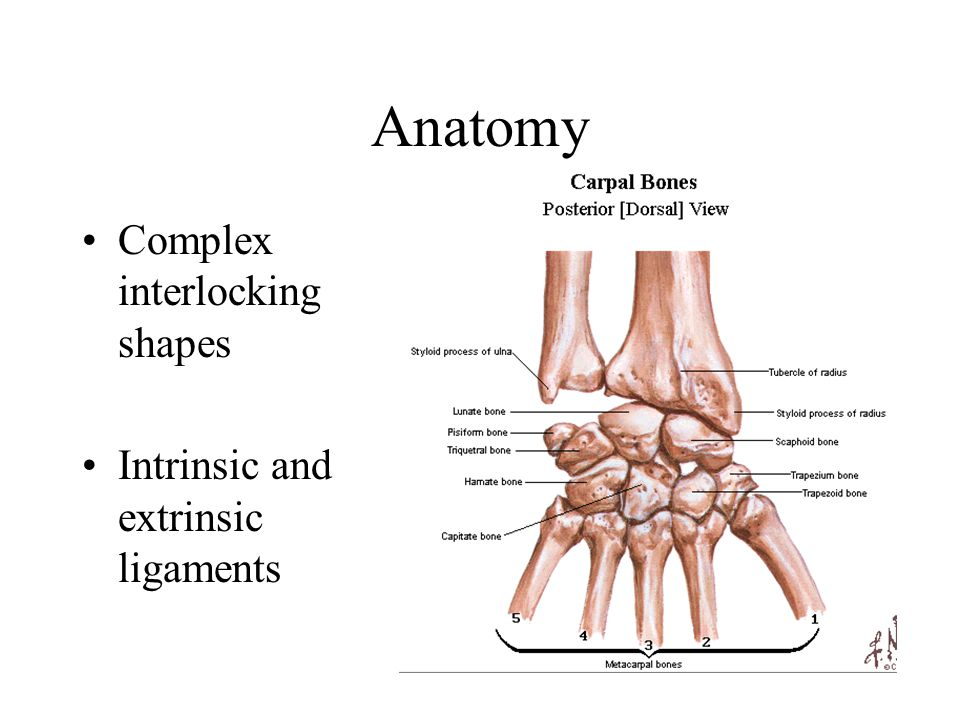 Carpal Ligaments Wrist Biomechanics Ppt Video Online Download