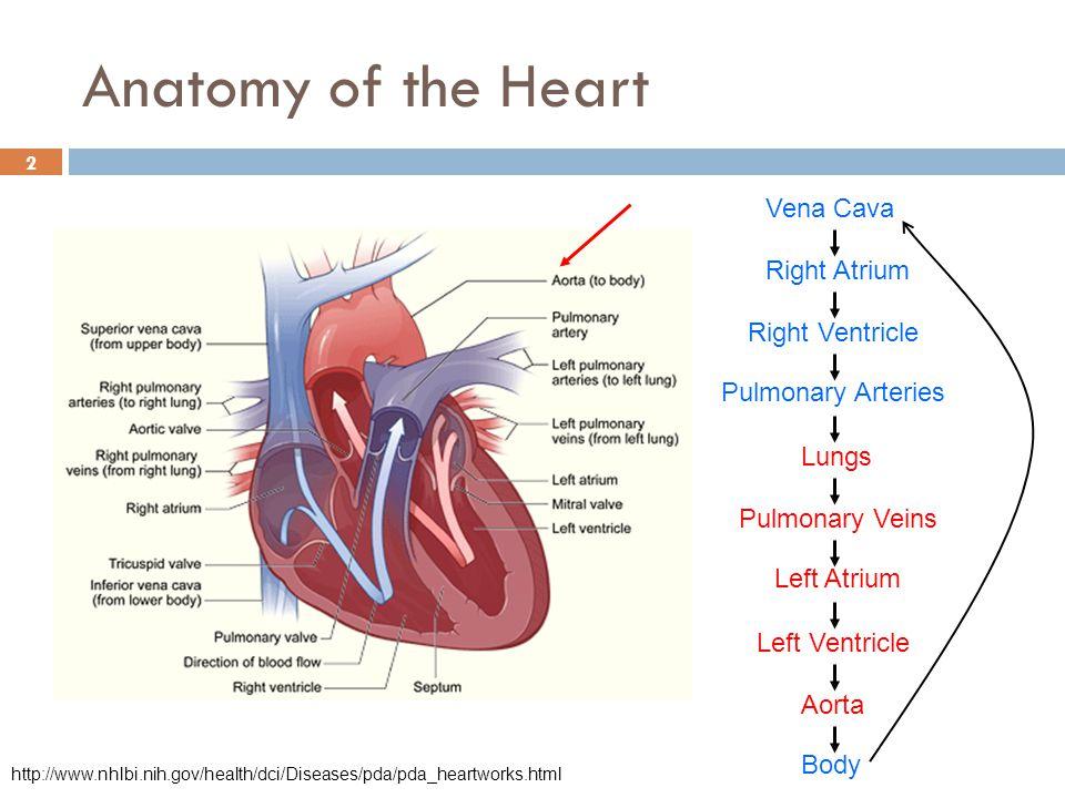Pulmonary Artery Implant Sensor Diagram - Block And Schematic Diagrams •