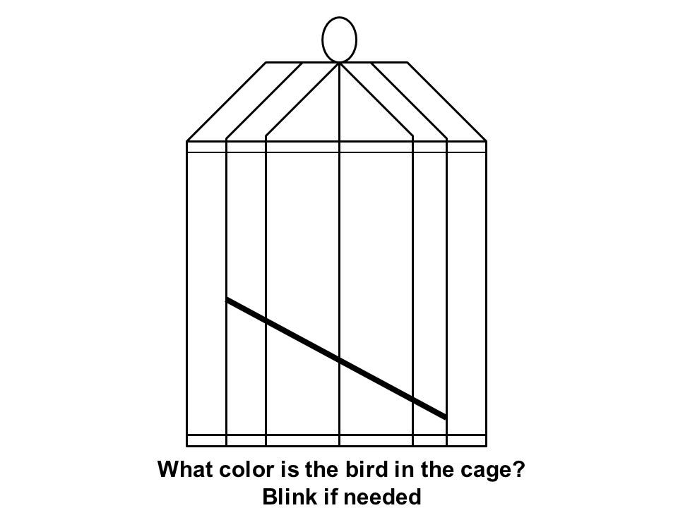 What color is the bird in the cage