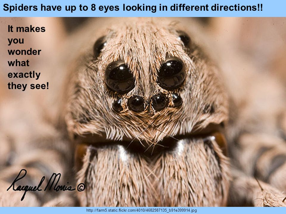 Spiders have up to 8 eyes looking in different directions!!