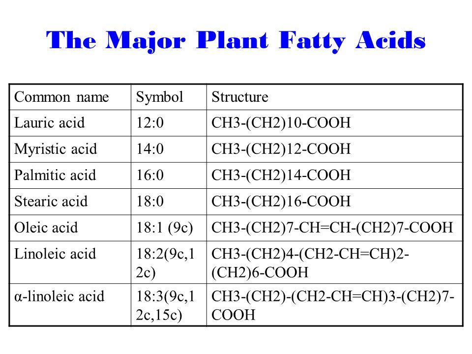 Starch Lipid Organic Waste