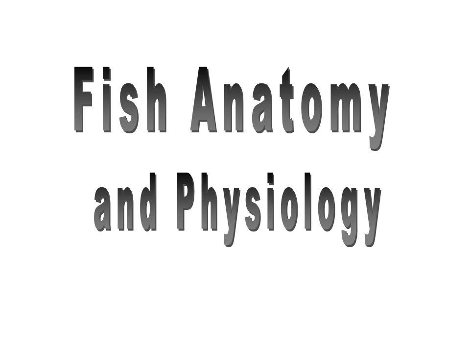 Groß Anatomy And Physiology Of Fish Ideen - Anatomie Ideen - finotti ...