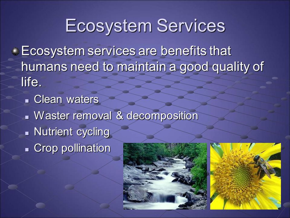 Ecosystem Services Ecosystem services are benefits that humans need to maintain a good quality of life.