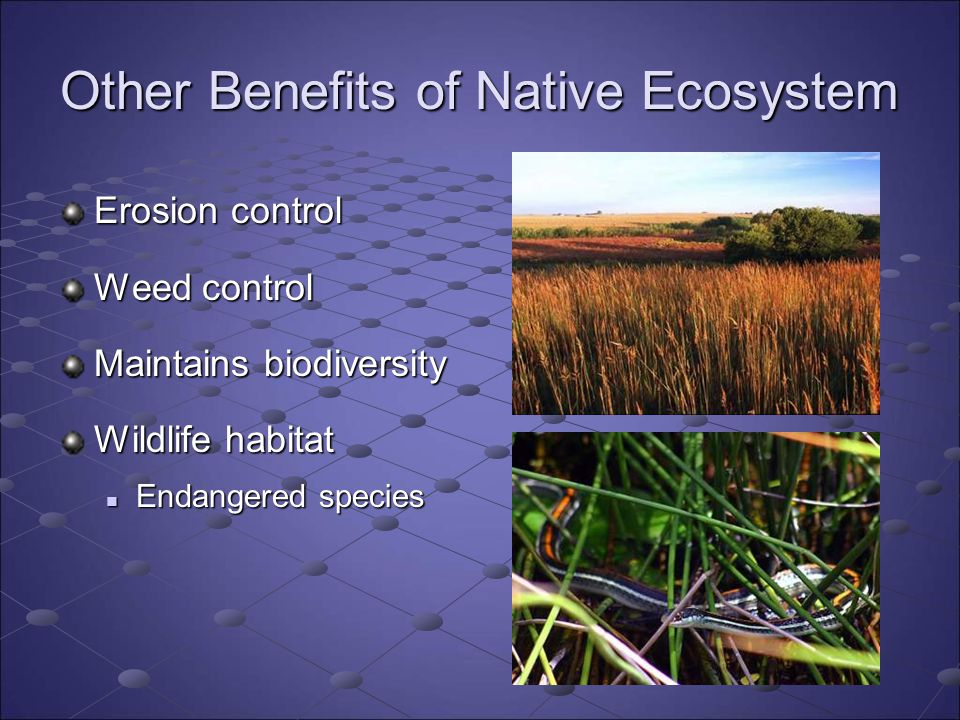 Other Benefits of Native Ecosystem