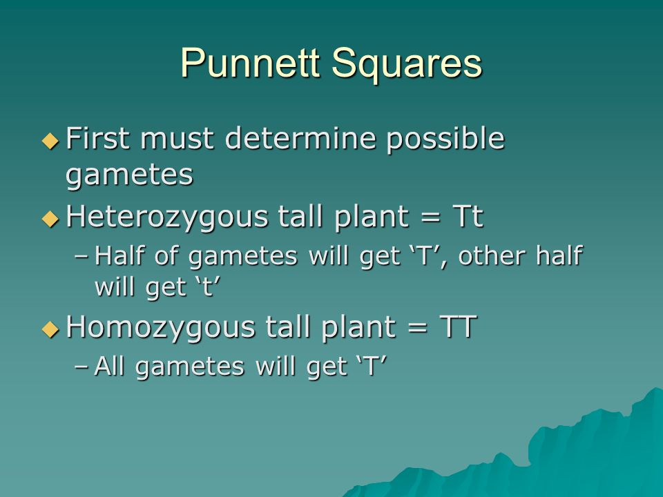 Punnett Squares First must determine possible gametes