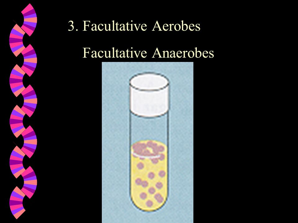 3. Facultative Aerobes Facultative Anaerobes