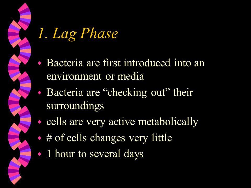 1. Lag Phase Bacteria are first introduced into an environment or media. Bacteria are checking out their surroundings.
