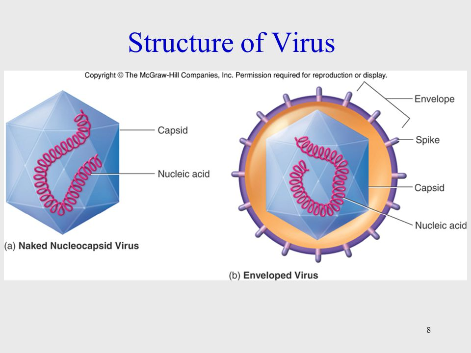 Structure Of A Virus Diagram Diy Enthusiasts Wiring Diagrams