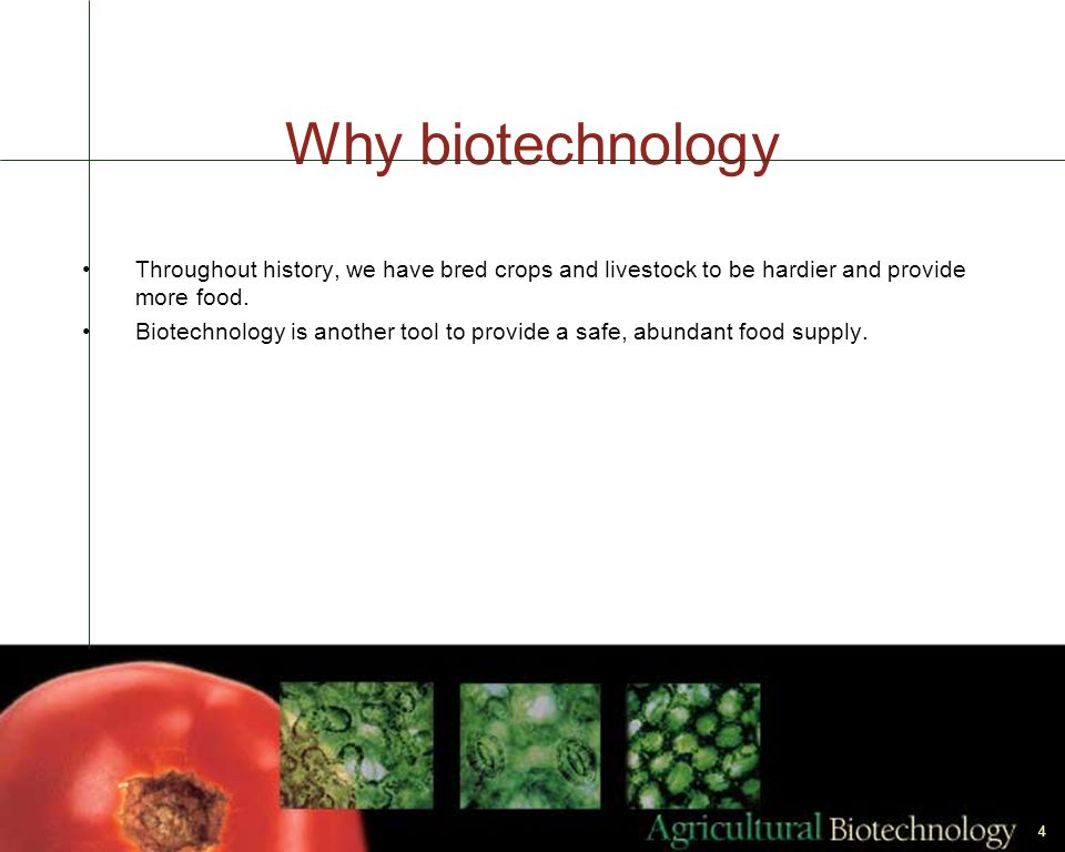 Why biotechnology Throughout history, we have bred crops and livestock to be hardier and provide more food.