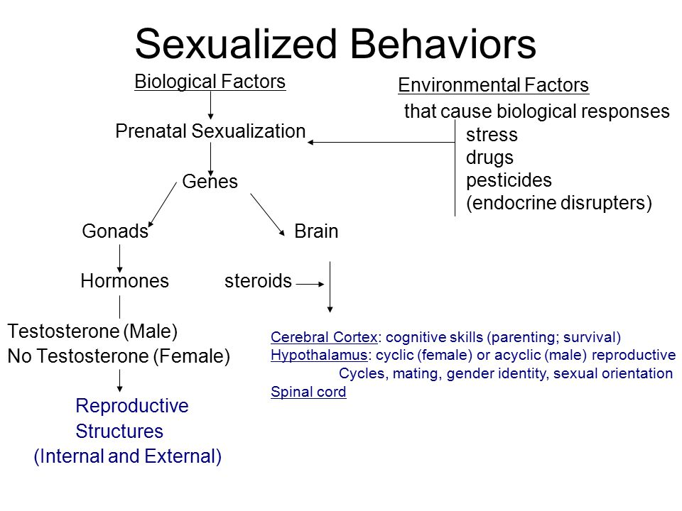 Male brain sexuality and reproduction