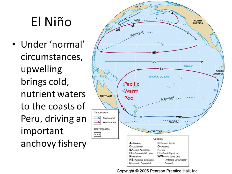 El Niño Under 'normal' circumstances, upwelling brings cold, nutrient waters to the coasts of Peru, driving an important anchovy fishery.