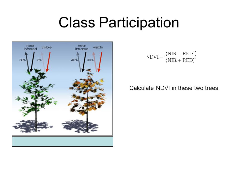 Class Participation Calculate NDVI in these two trees.
