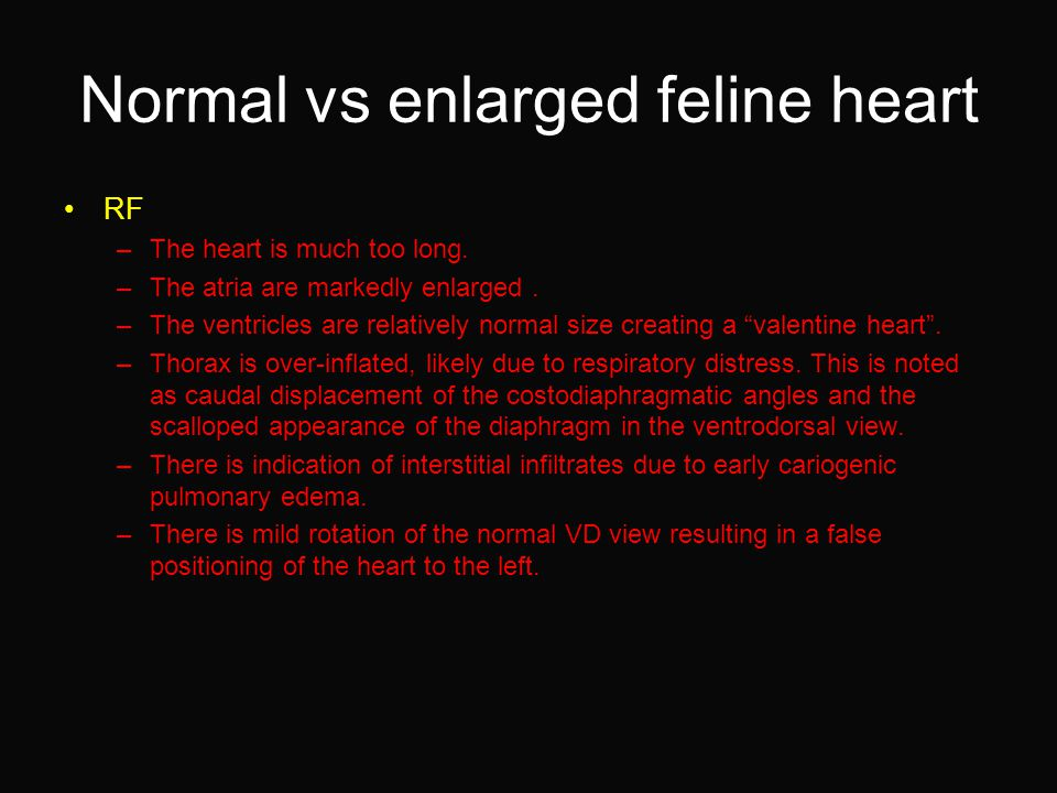 Normal vs enlarged feline heart