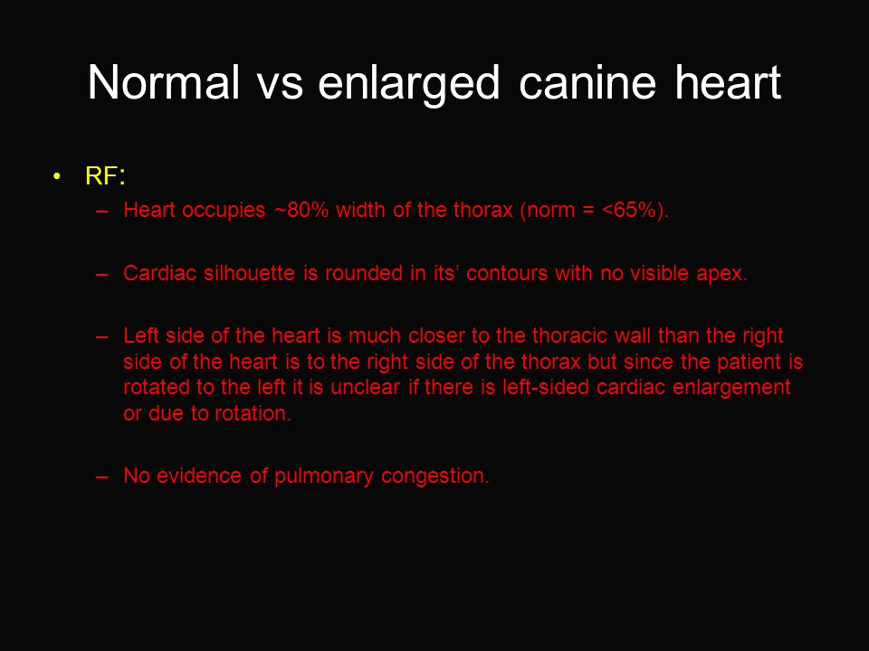 Normal vs enlarged canine heart