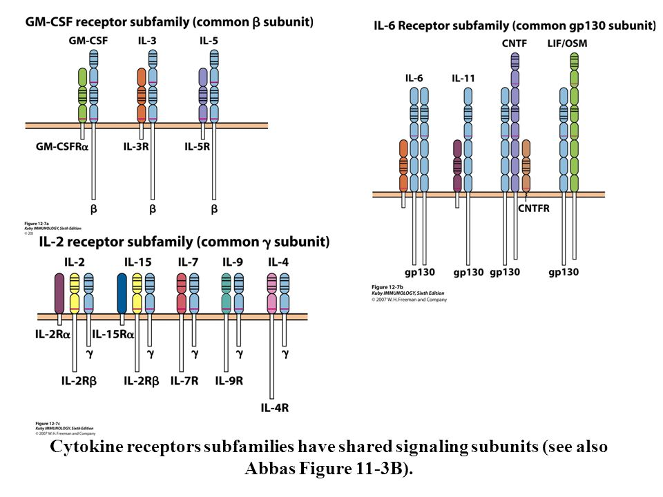 Cytokine receptors subfamilies have shared signaling subunits (see also Abbas Figure 11-3B).