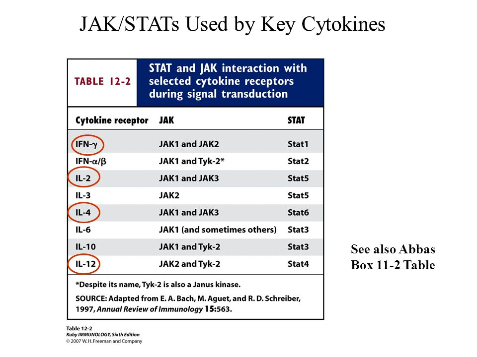 JAK/STATs Used by Key Cytokines