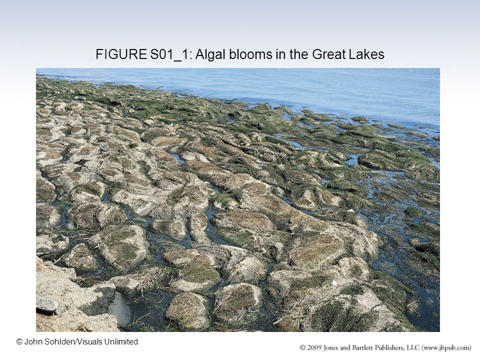 FIGURE S01_1: Algal blooms in the Great Lakes