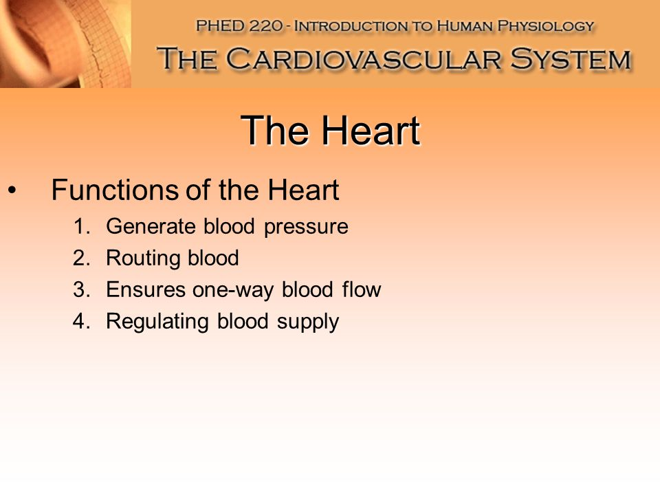 The Heart Functions Of The Heart Generate Blood Pressure Routing