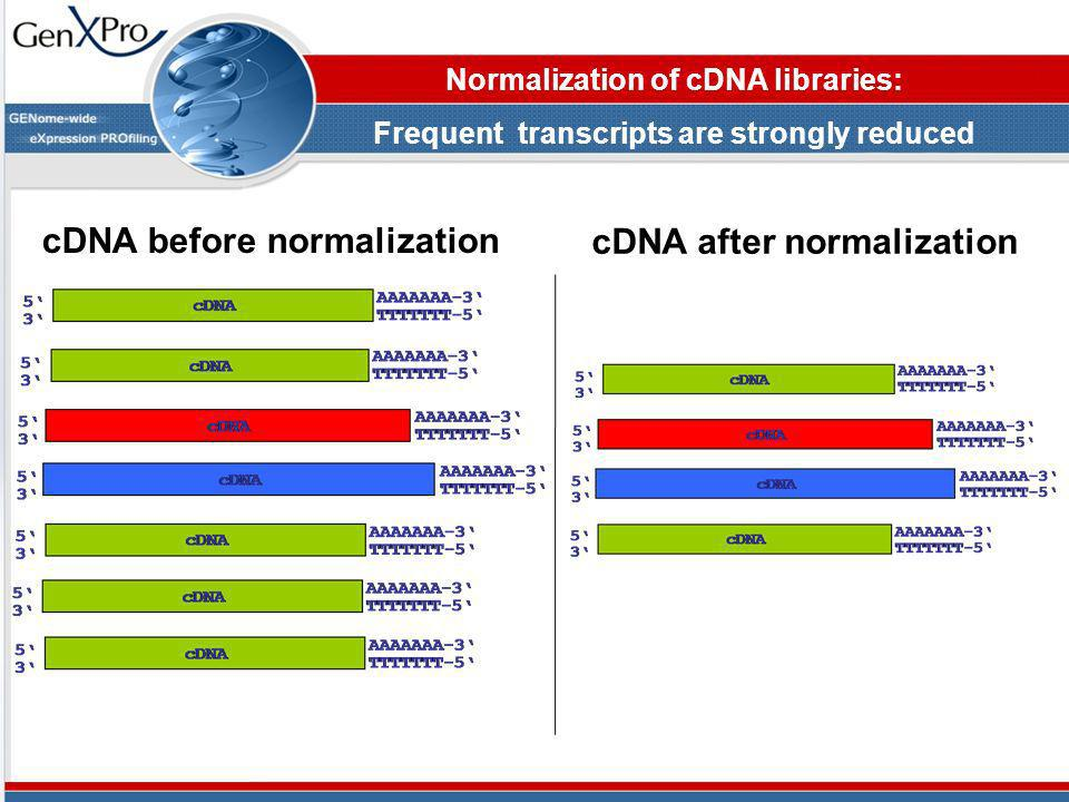 cDNA before normalization cDNA after normalization