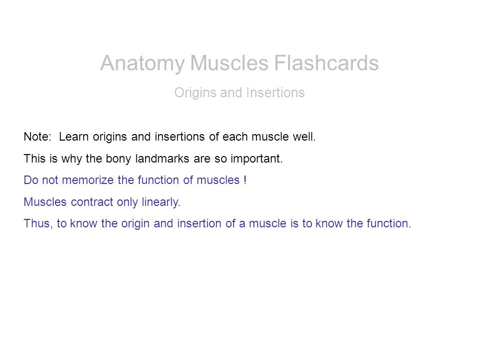 Anatomy Muscles Flashcards - ppt video online download