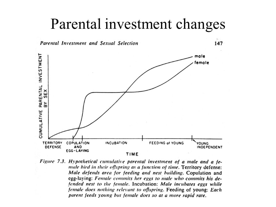 Concorde fallacy parental investment strategies phth indicator forex
