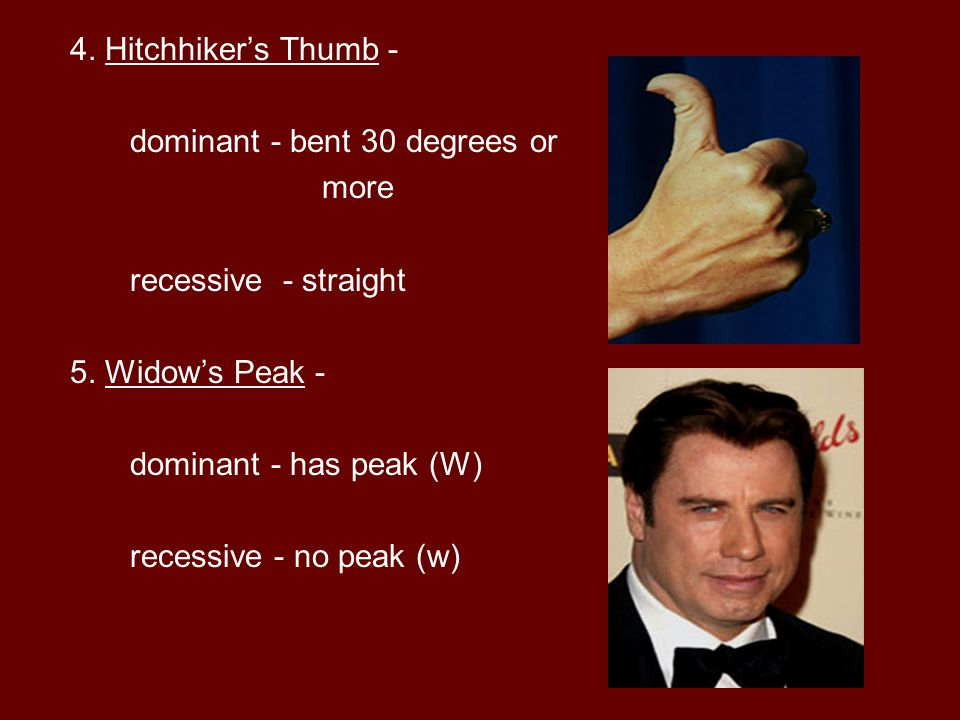 4. Hitchhiker's Thumb - dominant - bent 30 degrees or. more. recessive - straight. 5. Widow's Peak -