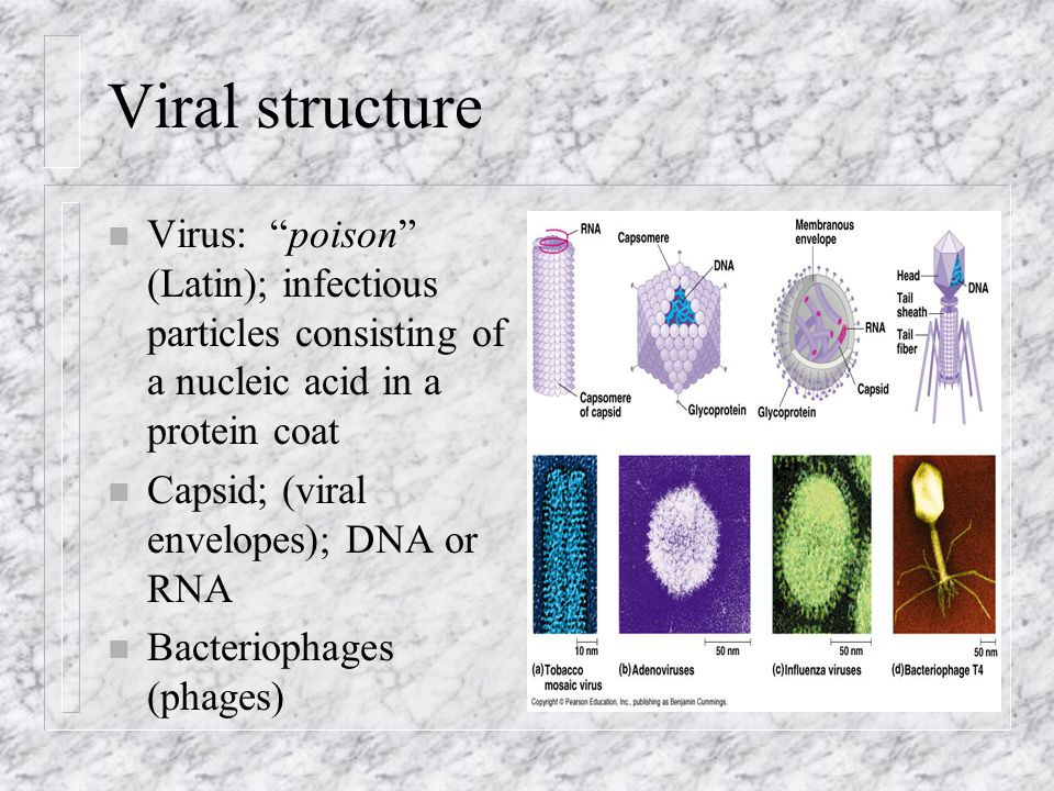 Viral structure Virus: poison (Latin); infectious particles consisting of a nucleic acid in a protein coat.