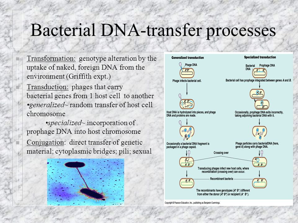 Bacterial DNA-transfer processes