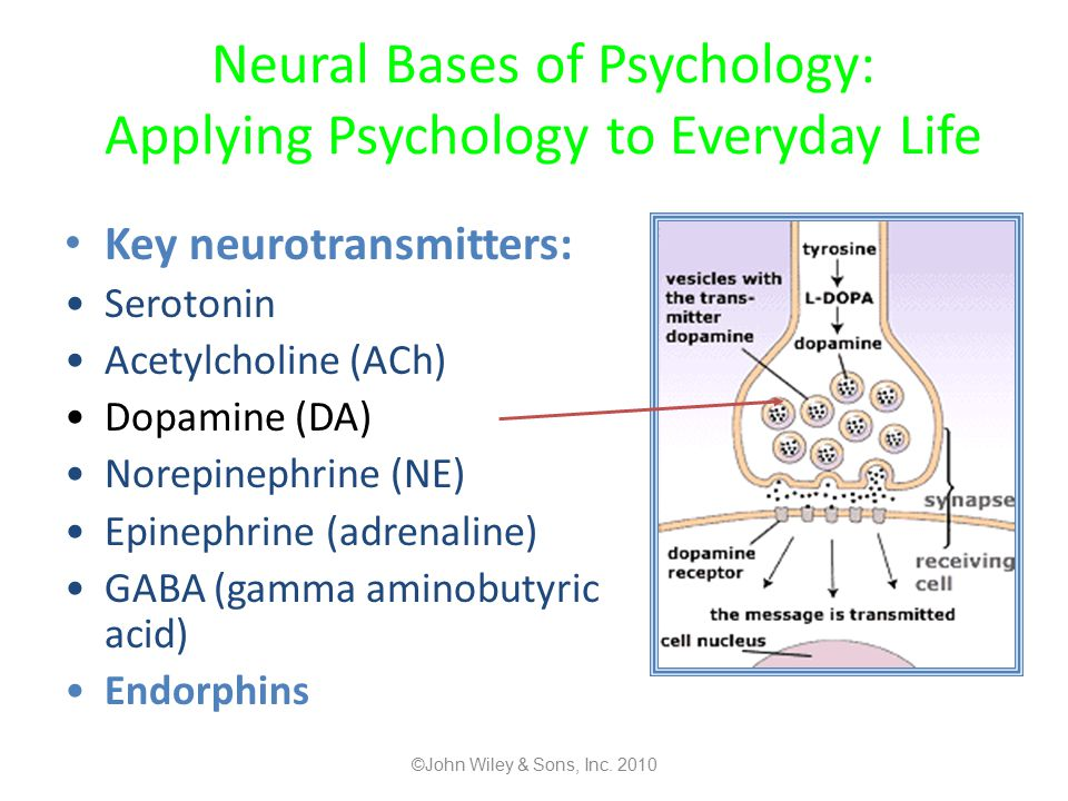 Neural Bases of Psychology: Applying Psychology to Everyday Life