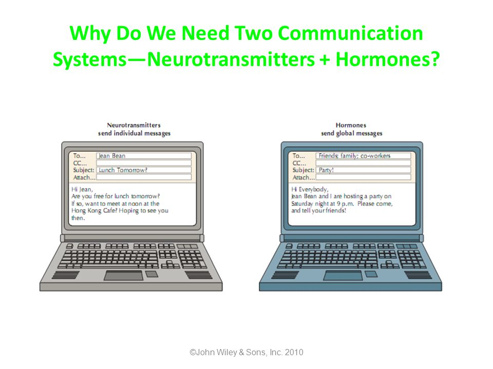Why Do We Need Two Communication Systems—Neurotransmitters + Hormones