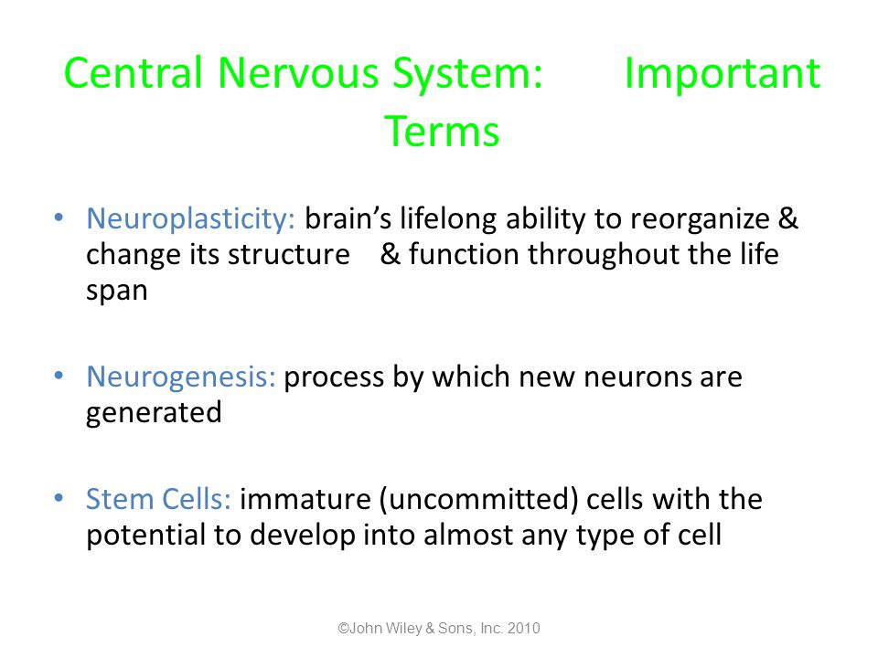 Central Nervous System: Important Terms