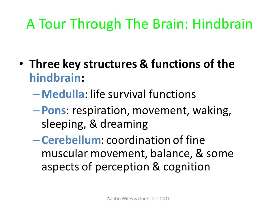 A Tour Through The Brain: Hindbrain