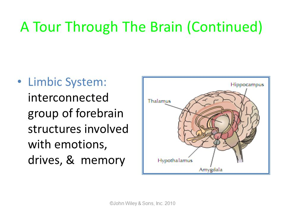 A Tour Through The Brain (Continued)