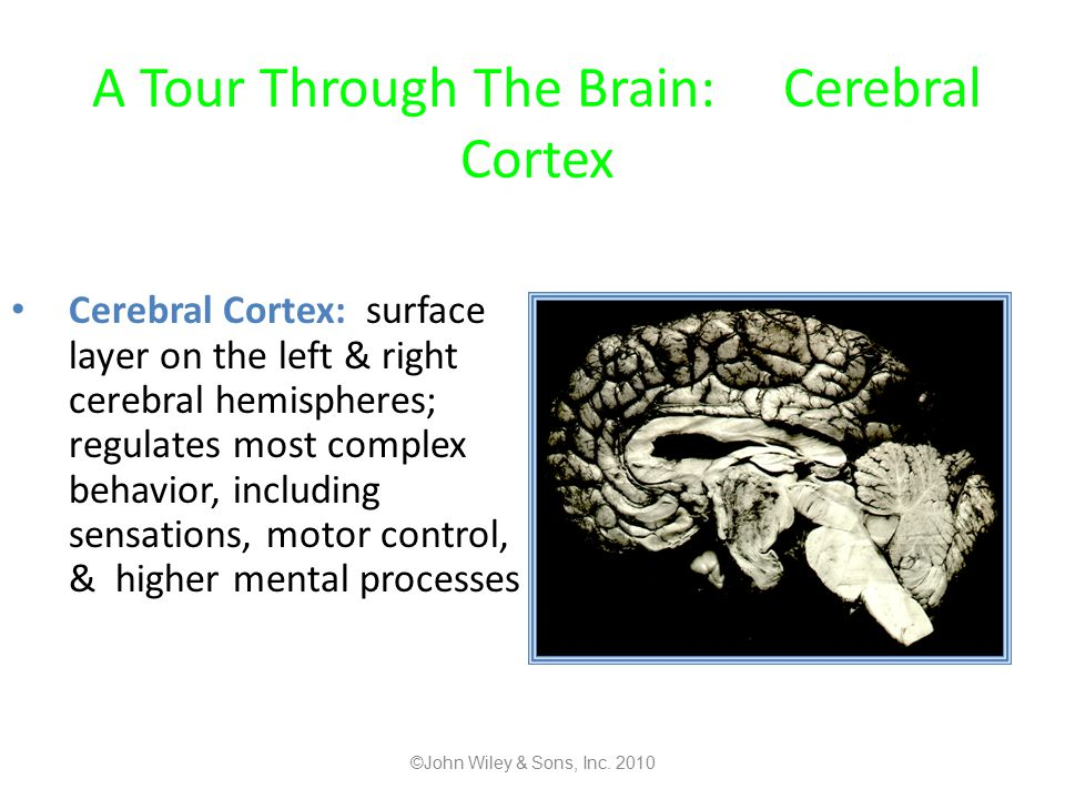 A Tour Through The Brain: Cerebral Cortex